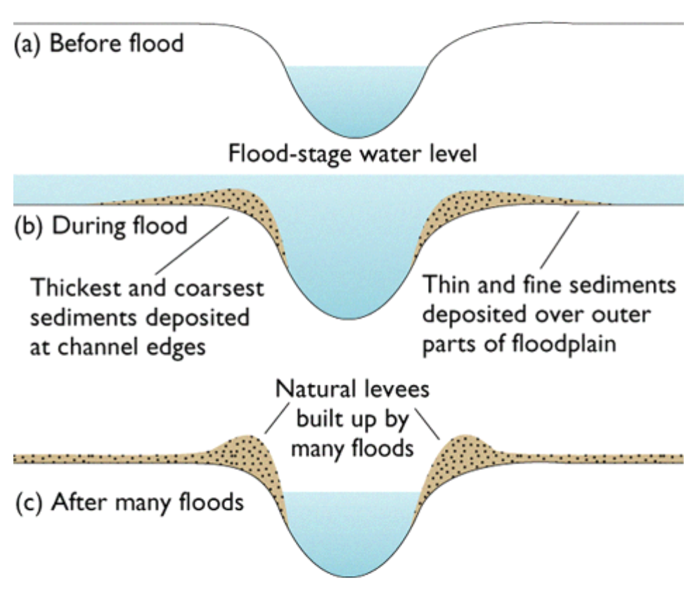 River features geo for cxc natural levees are formed as a result of many floods depositing sediment on the banks of ccuart Image collections